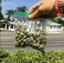 Buy Alaskan ThunderFuck – BestMarijuanaOnlineShop.com